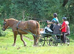 emploi bafd equitation gisors